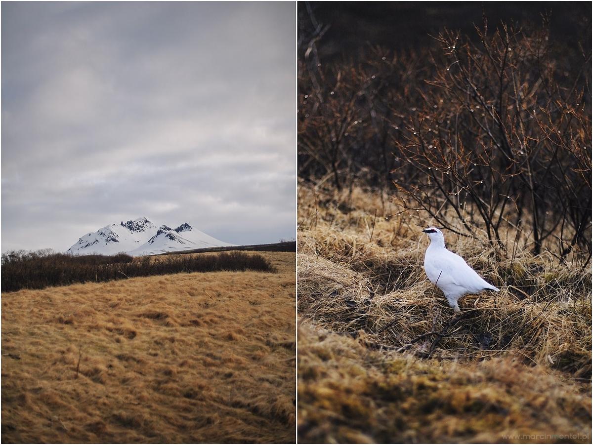 Islandia0054