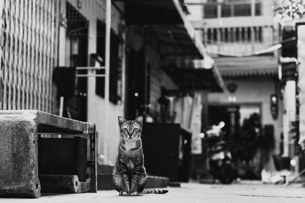 bangkok_koh_chang0061